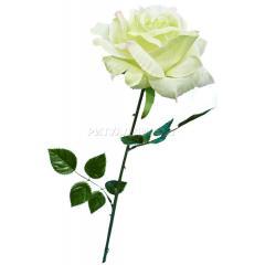 Роза-40