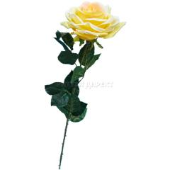 Роза-60